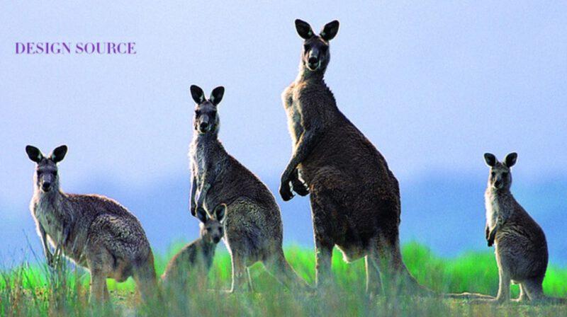 1188 Kangaroo Decorative 400mm 6 Hook Black Coat Rack